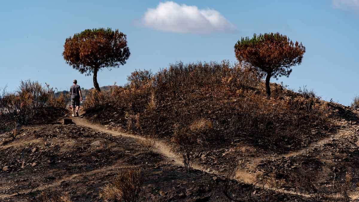 Zona de Collserola quemada por un incendio, el pasado mes de junio.