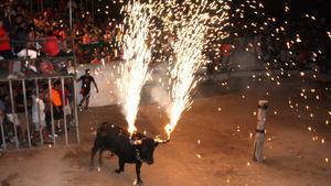 El sofriment d'un bou en un 'Concurs d'Emboladors' causa indignació a les xarxes