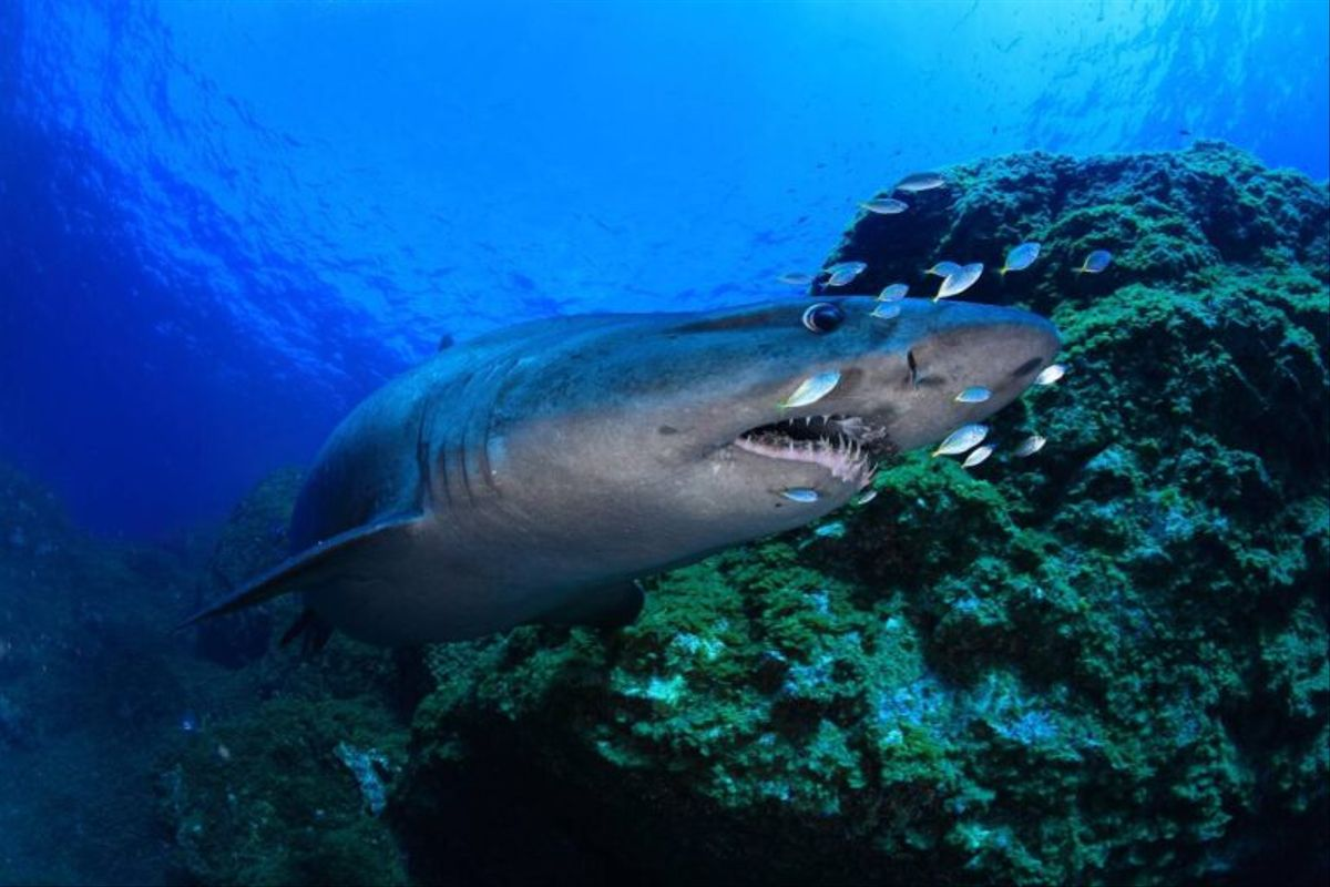Un tiburón ataca a una mujer en una playa de Florida