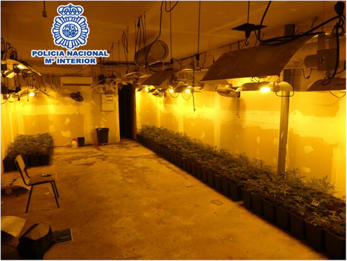 Imagen de la plantación de marihuana encontrada en un garaje de Cornellà