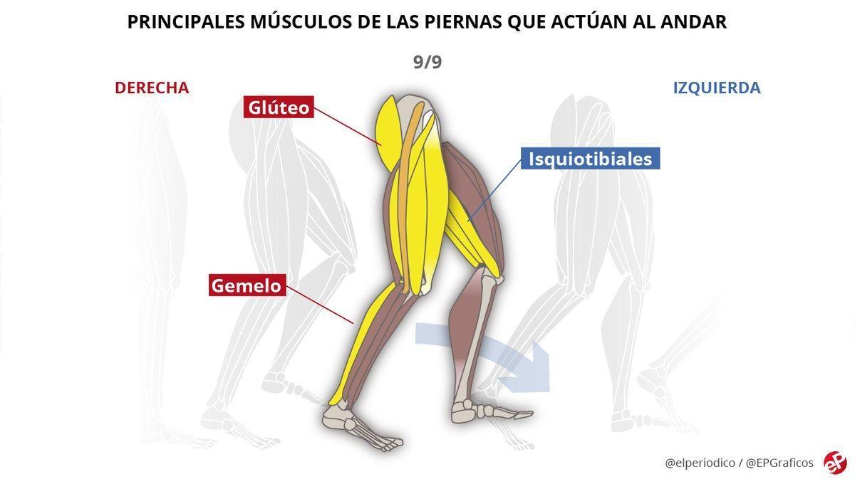 Principales músculos de las piernas que se activan al andar