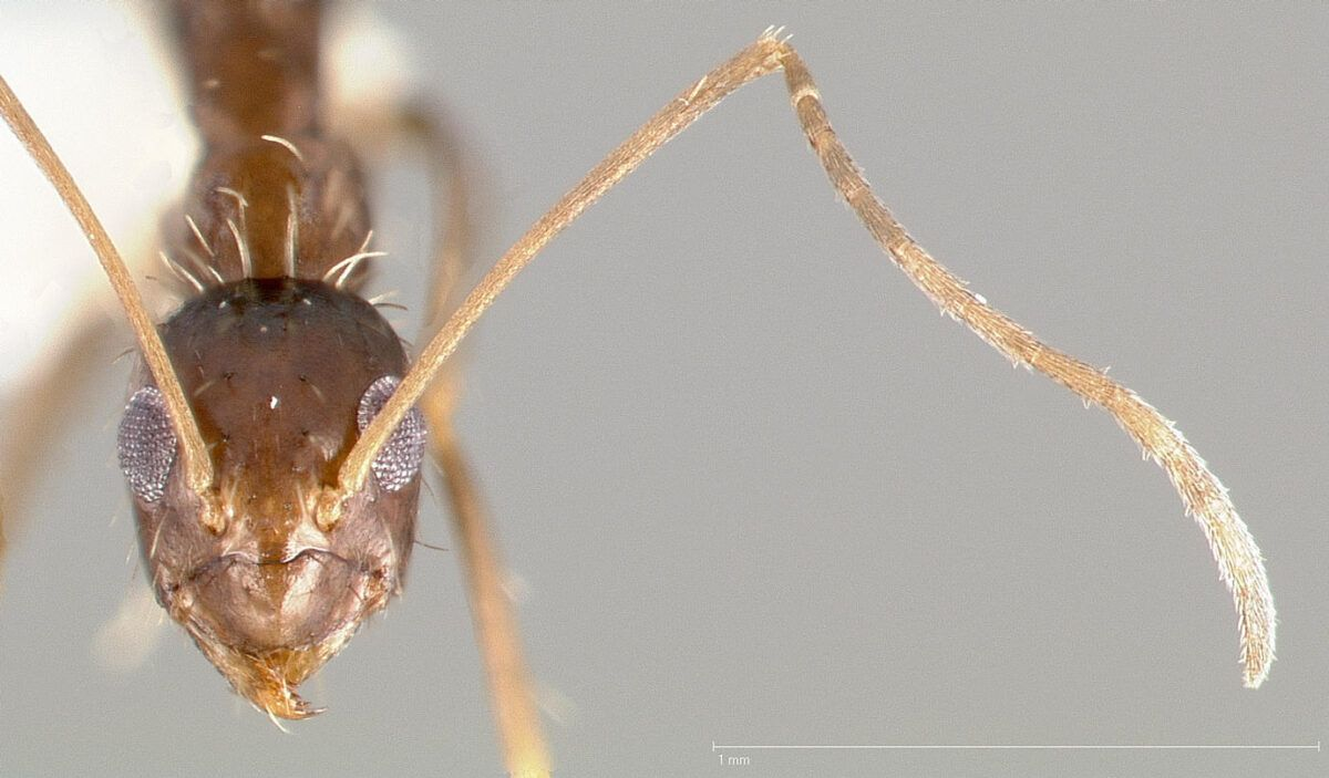 10 trucos para eliminar las hormigas en casa