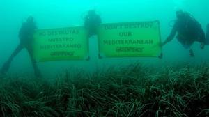 Alexandra Cousteau: 'el Mediterrani es pot perdre en la següent generació'