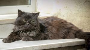 Un gato en su casa de Barcelona.