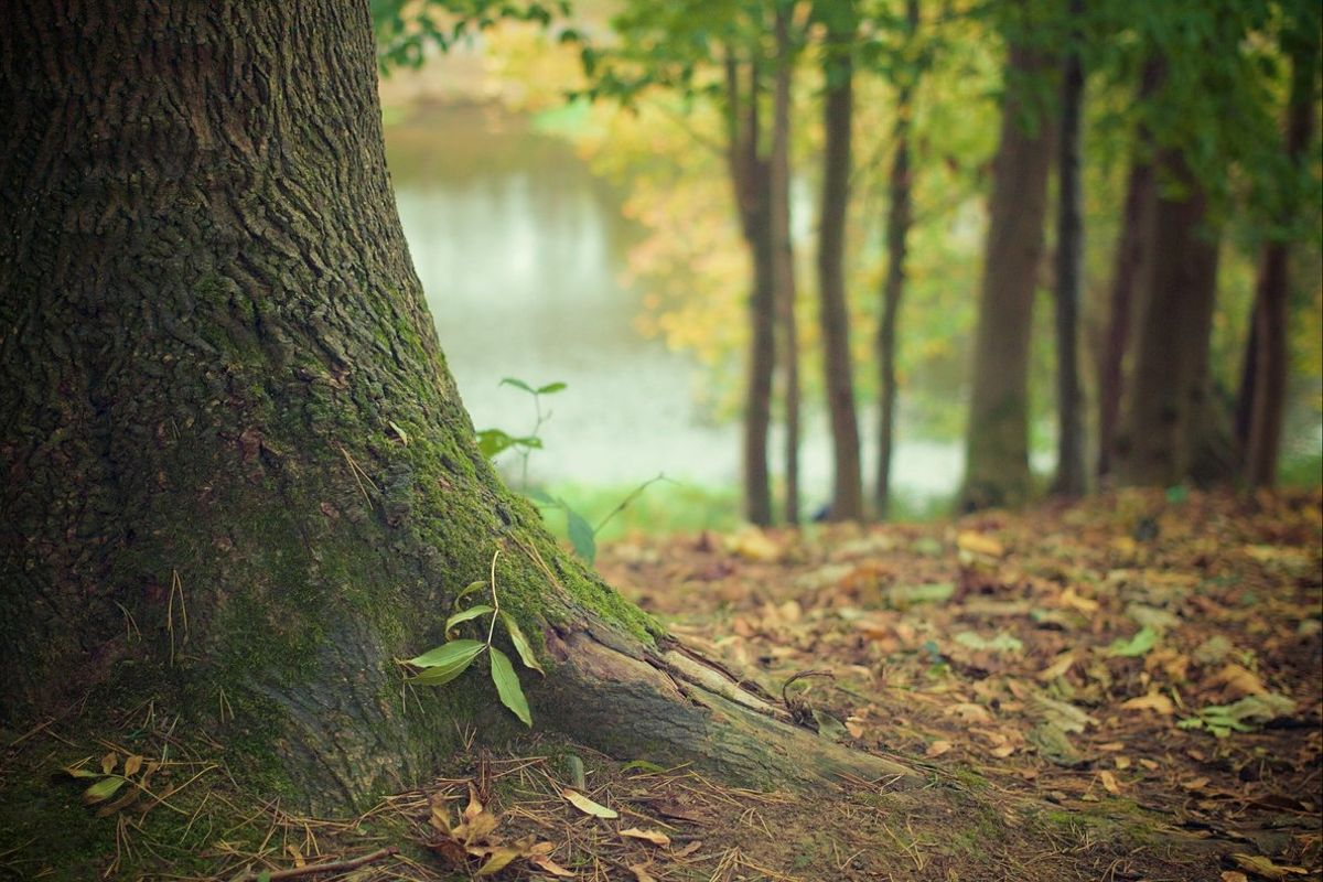 La startup One Oak reforesta un árbol por cada producto que vende.