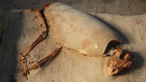 Descobert a Egipte el cementiri de «mascotes» més antic