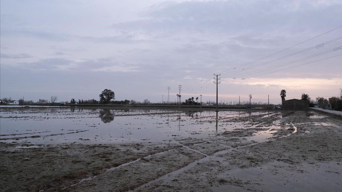 Zona cercana a Riumar (Baix Ebre) en el Delta del Ebre, inundada por el temporal 'Glòria', el 24 de enero pasado.