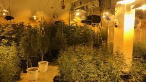 Desmantellada una plantació de marihuana en un local del Carmel (Barcelona)