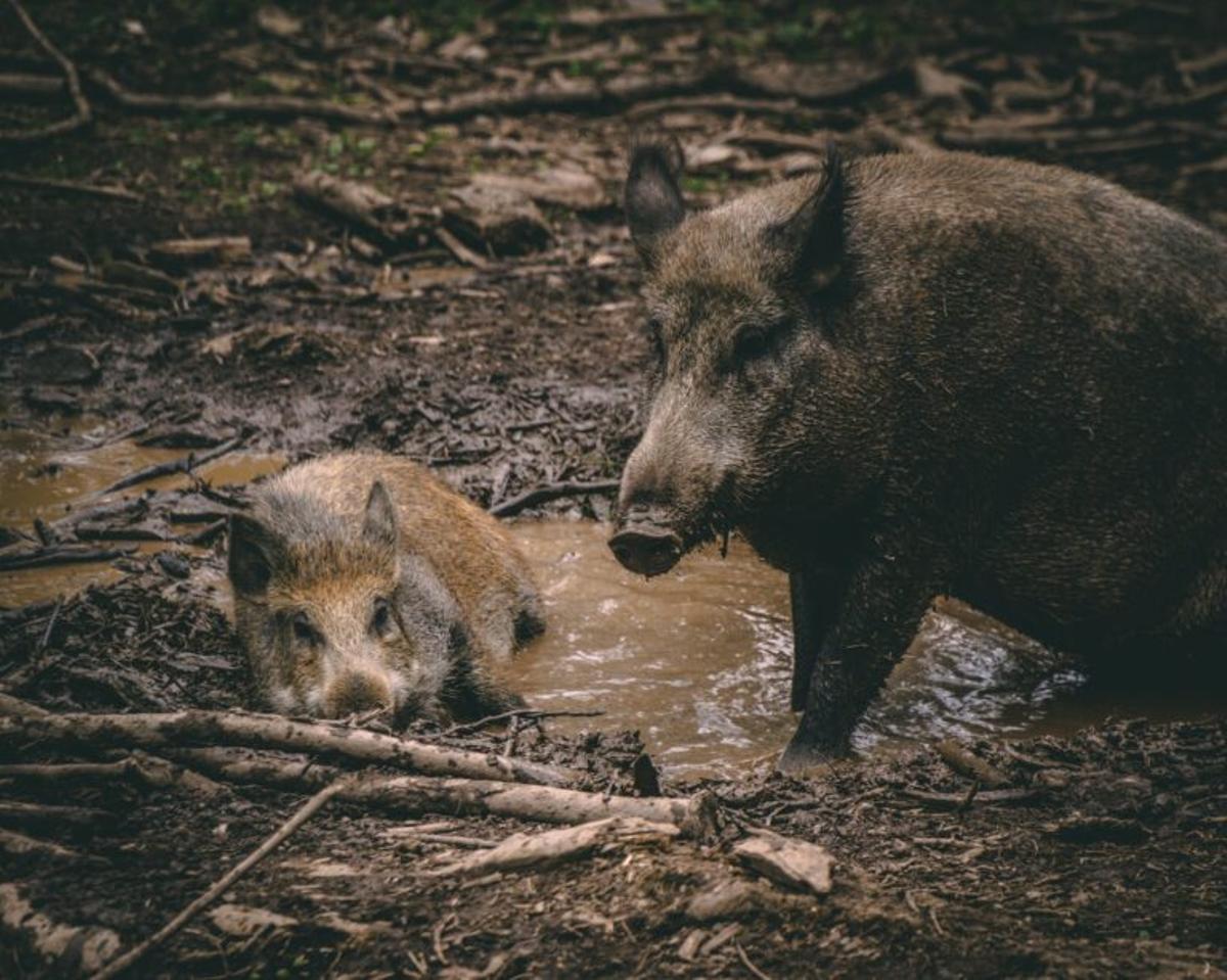 ¿Te gusta comer carne de caza? Esto es lo que tienes que saber