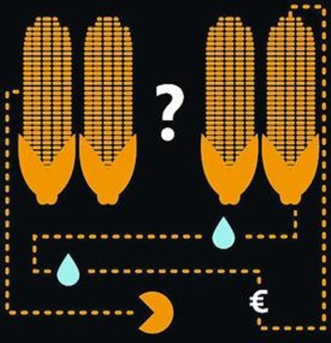 'Fracking' y maíz