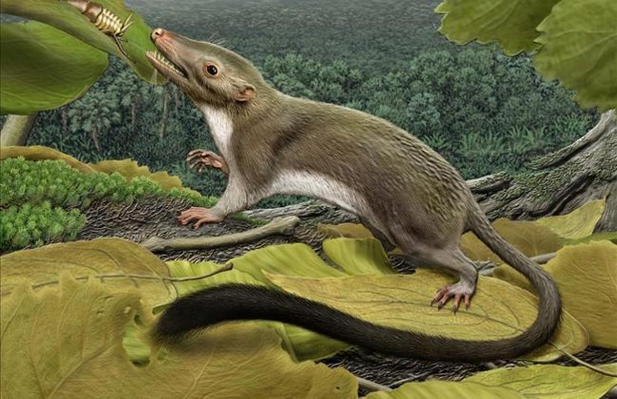 Reconstrucción artística del antecesor de los mamíferos placentarios.