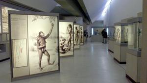 Vista general de la exposición permanente del museo de Altamira.