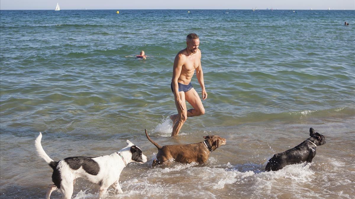 Perros en la playa de Llevant.