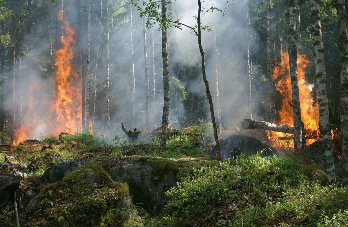 Els grans incendis forestals es van triplicar el 2020 respecte al 2019