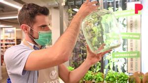 Vuelve la garrafa de vidrio de 8 litros