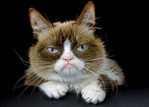Grumpy, la gata más influyente de internet, ha muerto a los 7 años.