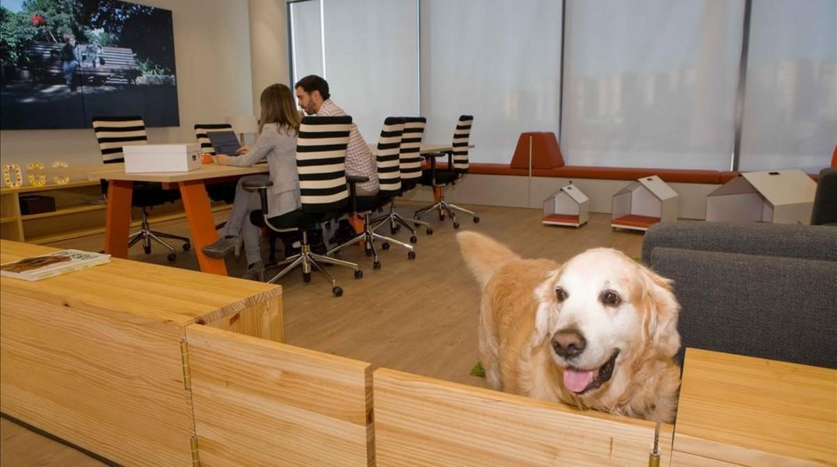 'Doggy zone'en las oficinas de Affinity. Los perros hasta pueden asistir a las reuniones con sus dueños.