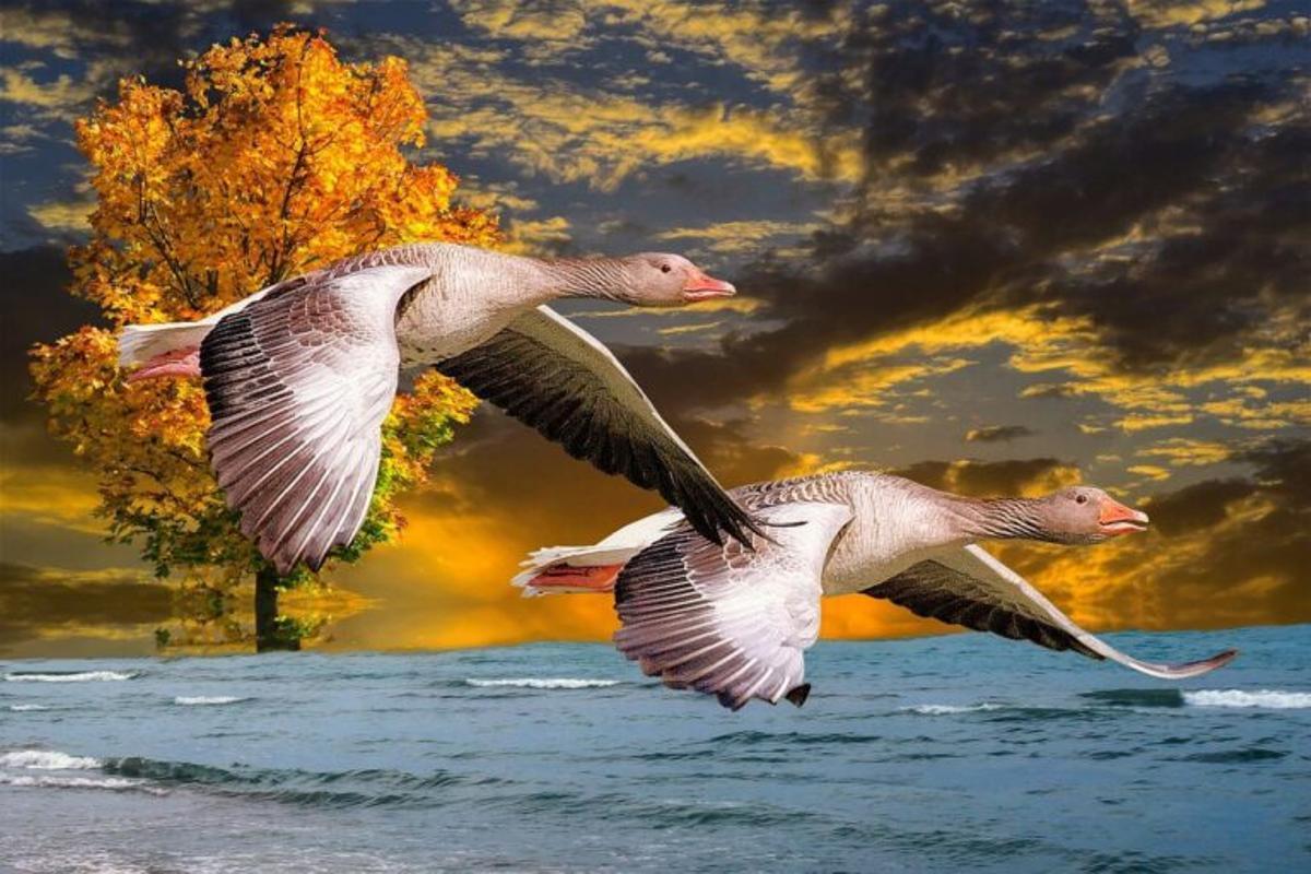 Las aves tienen un sentido cuántico de la orientación