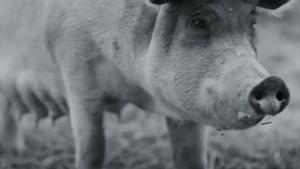 Crítica de cine 'Gunda': l'heroica vida del bestiar