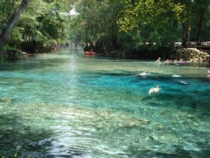 Ginnie Springs, al norte de Florida (Estados Unidos) son unos manantiales naturales protegidos, amenazados por Nestlé que pretende extraer más de 4 millones de litros de agua al día