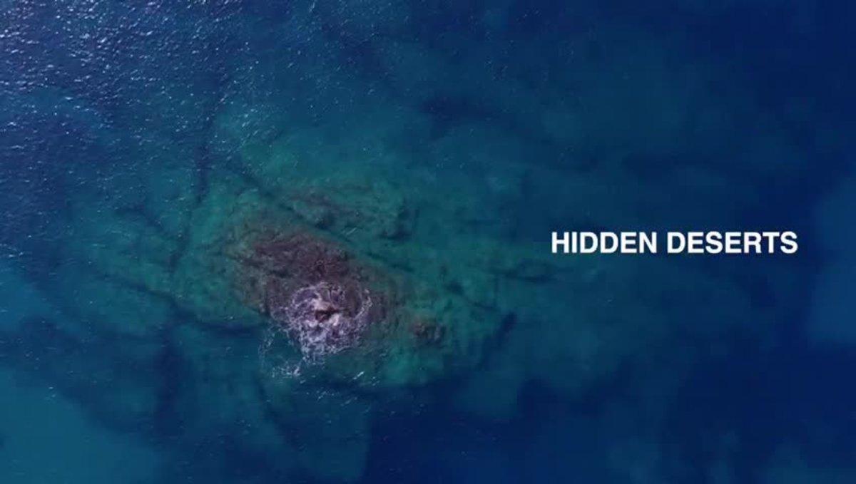 Presentación de la investigación sobre la desertización de los océanos.