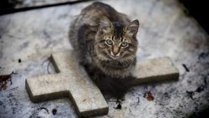 Un gato, sobre un nicho de un cementerio.