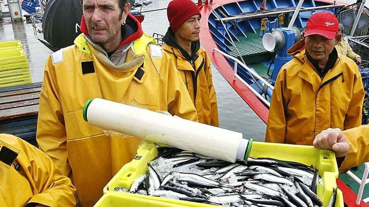 Tripulantes de un pesquero con cajas recién desembarcadas de anchoas.