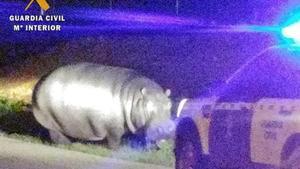 Un hipopótamo se escapa de un circo y campa a sus anchas por un pueblo de Badajoz