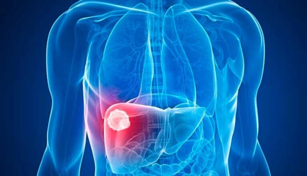 Los secretos tras la regeneración del hígado