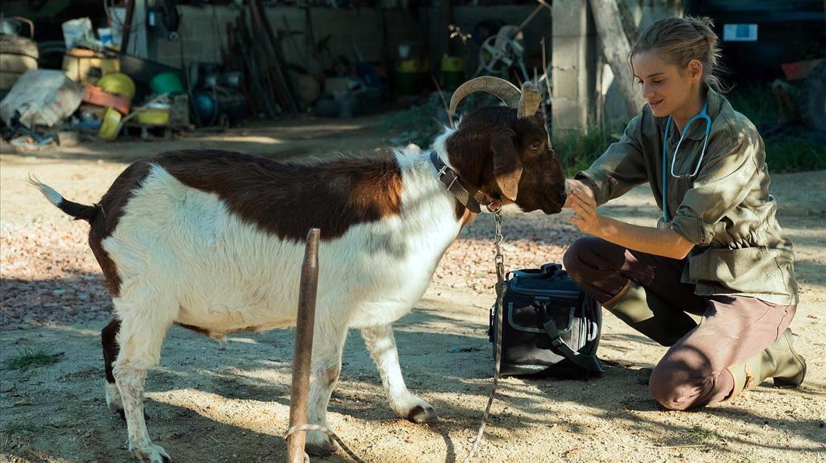 Una imagen de 'Una veterinaria en Borgoña'.