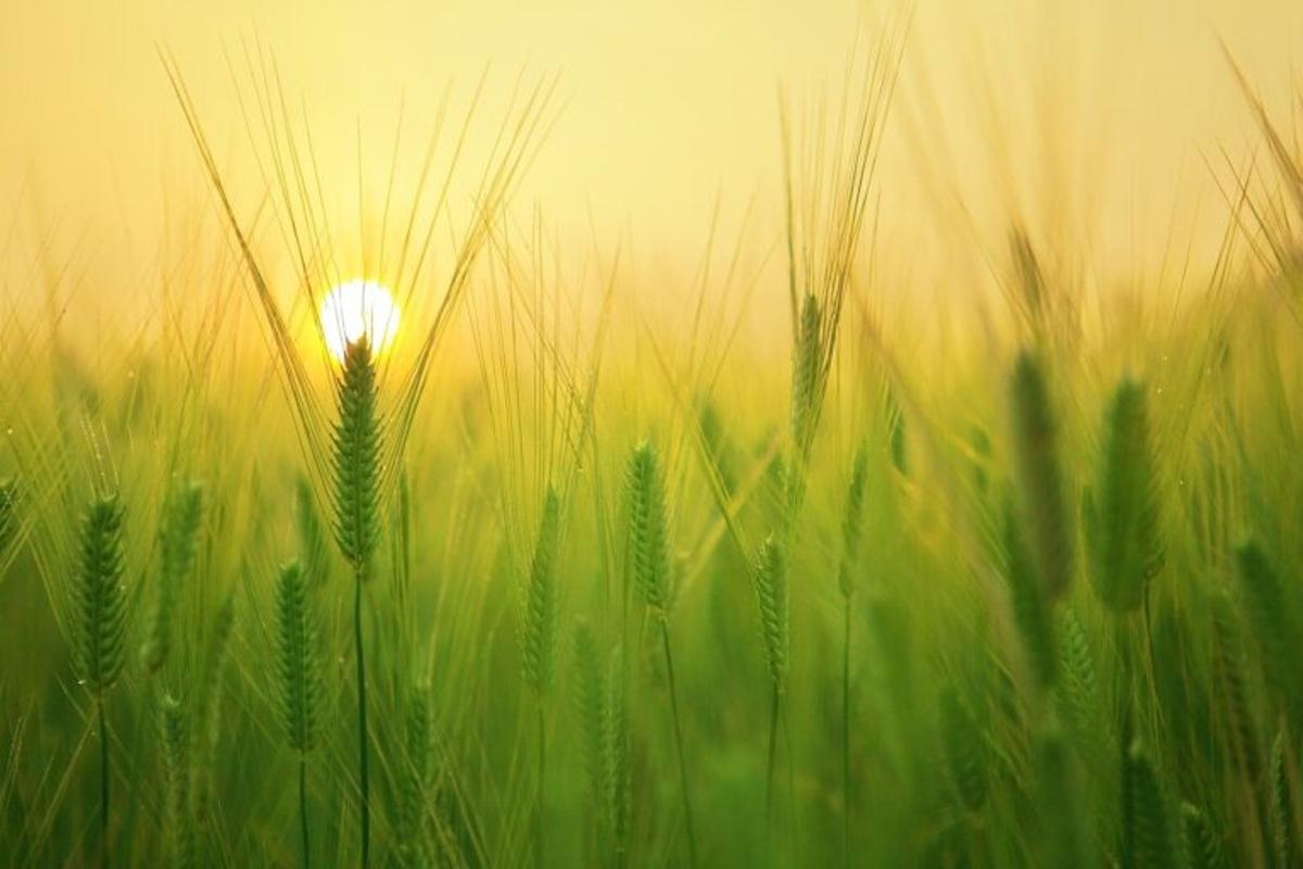 ¿Cuántas cosechas le quedan a nuestro planeta?
