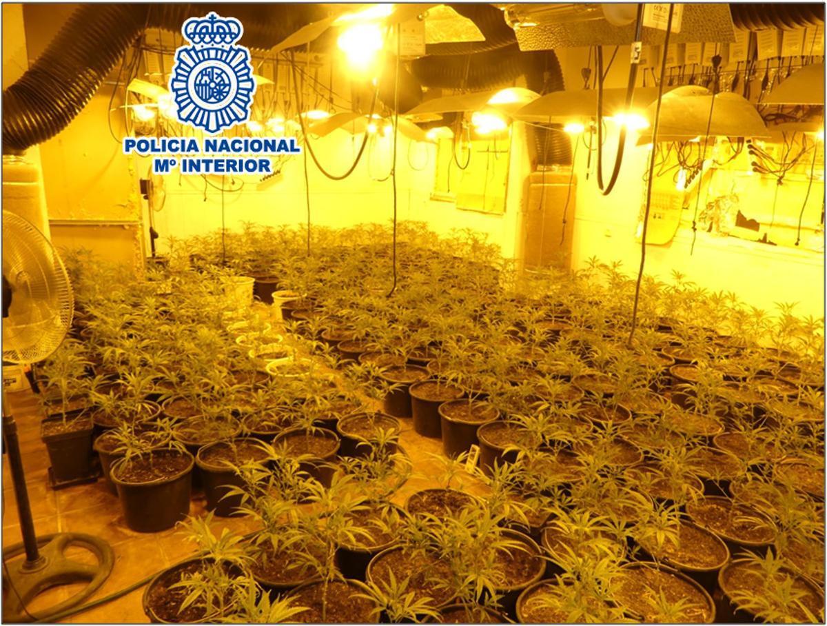 Desmantellen dues plantacions de marihuana a dues vivendes ocupades de Terrassa