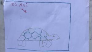 Una niña pierde a su tortuga y moviliza a todo el pueblo para encontrarla