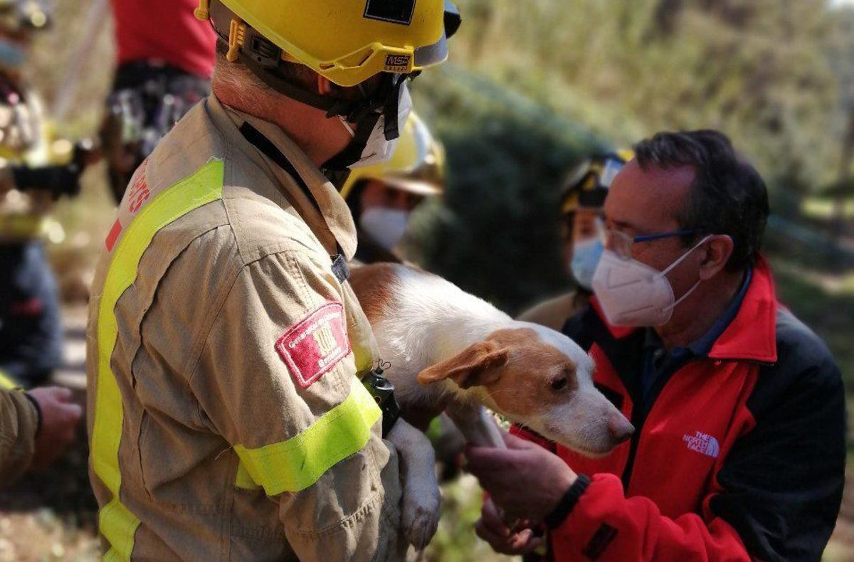 Rescate de tres perros en Sant Boi