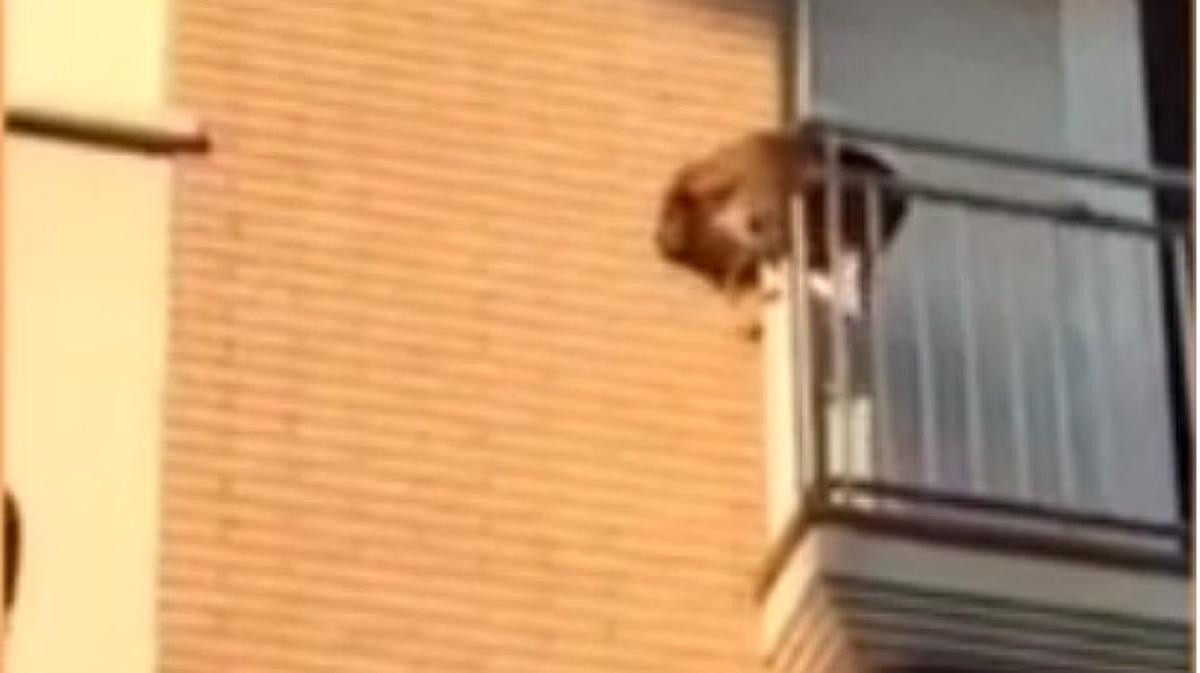 Un perro desesperado por el calor se lanza al vacío.