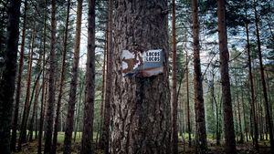 Bosque en Rascafría.