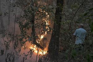 La selva del Amazonas también está amenazada en otros países.