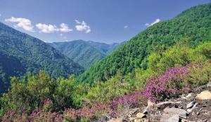 Muniellos: El bosc encantat