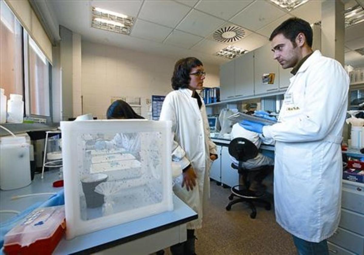 El científico Nitu Pagès, en uno de los laboratorios del Cresa, en el campus de la UAB en Bellaterra.