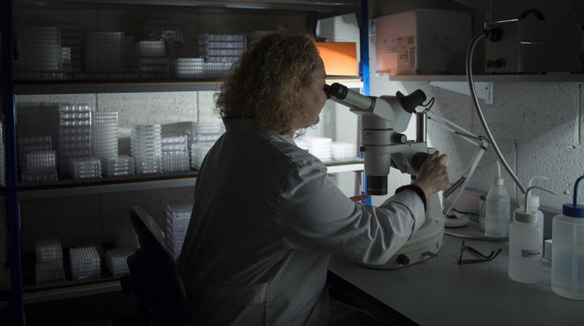 Una investigadora en un laboratorio de Barcelona.