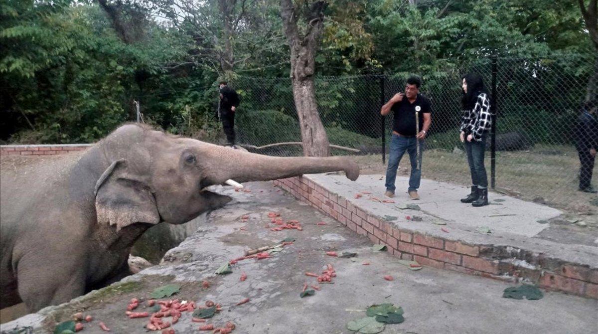 El elefante Kaavan, en el zoo de Islamabad (Pakistán)