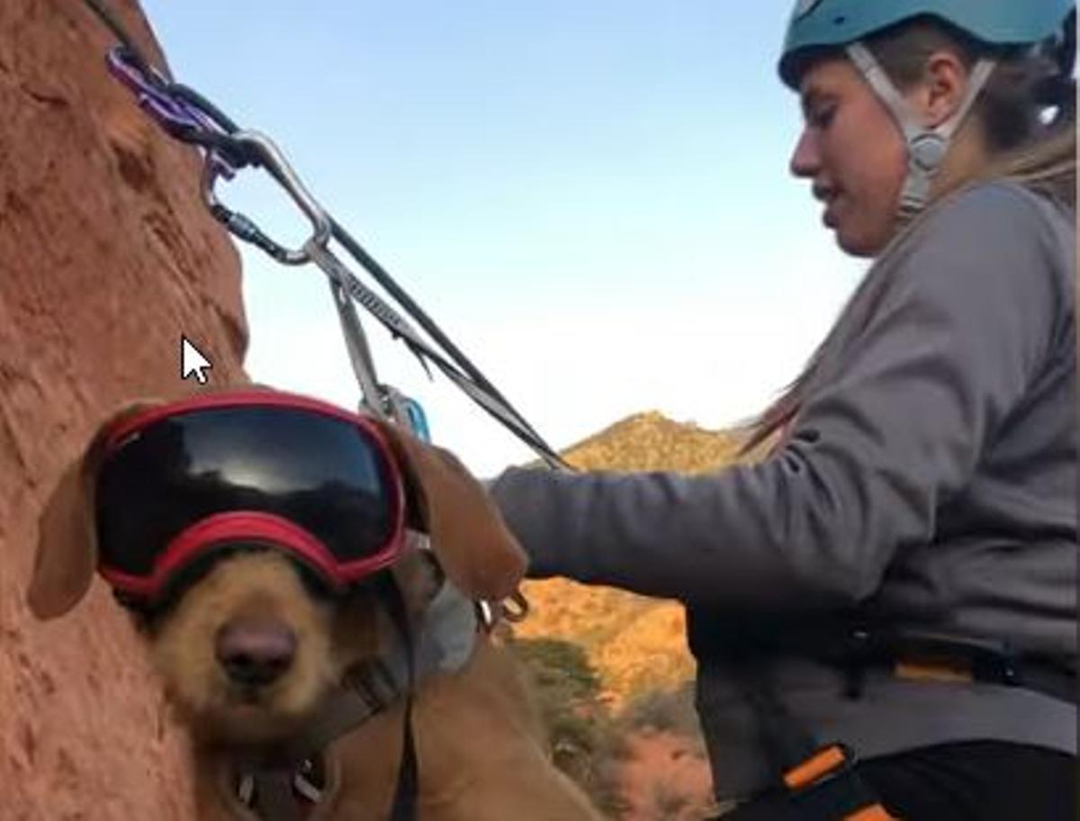 Vídeo | Lou, un perro aventurero: así hace rappel y barranquismo