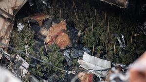 La plantación incendiada este lunes en la calle Sant Feliu de Codines, en el barrio de Torre Baró (Barcelona).