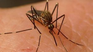 Mosquito Aedes Japonicus causante del Virus del Nilo.