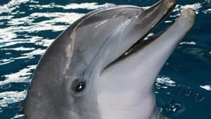 Los últimos tres delfines del Zoo de Barcelona, trasladados a Atenas.