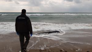Un agente rural de la Generalitat de Catalunya se acerca a recoger el cuerpo sin vida del delfín.