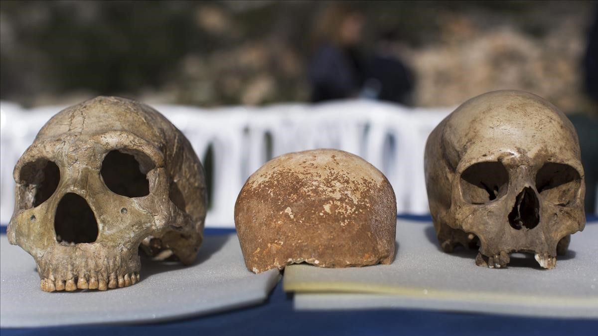Un cráneo neandertal (izquierda) y uno de Homo sapiens (derecha).