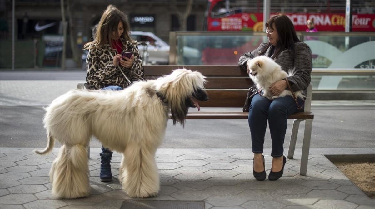 Dos mujeres conversan junto a sus perros en un banco de paseo de Gràcia, en una imagen de archivo.