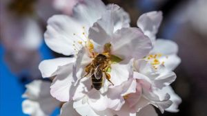 La primavera serà complicada per als al·lèrgics al pol·len