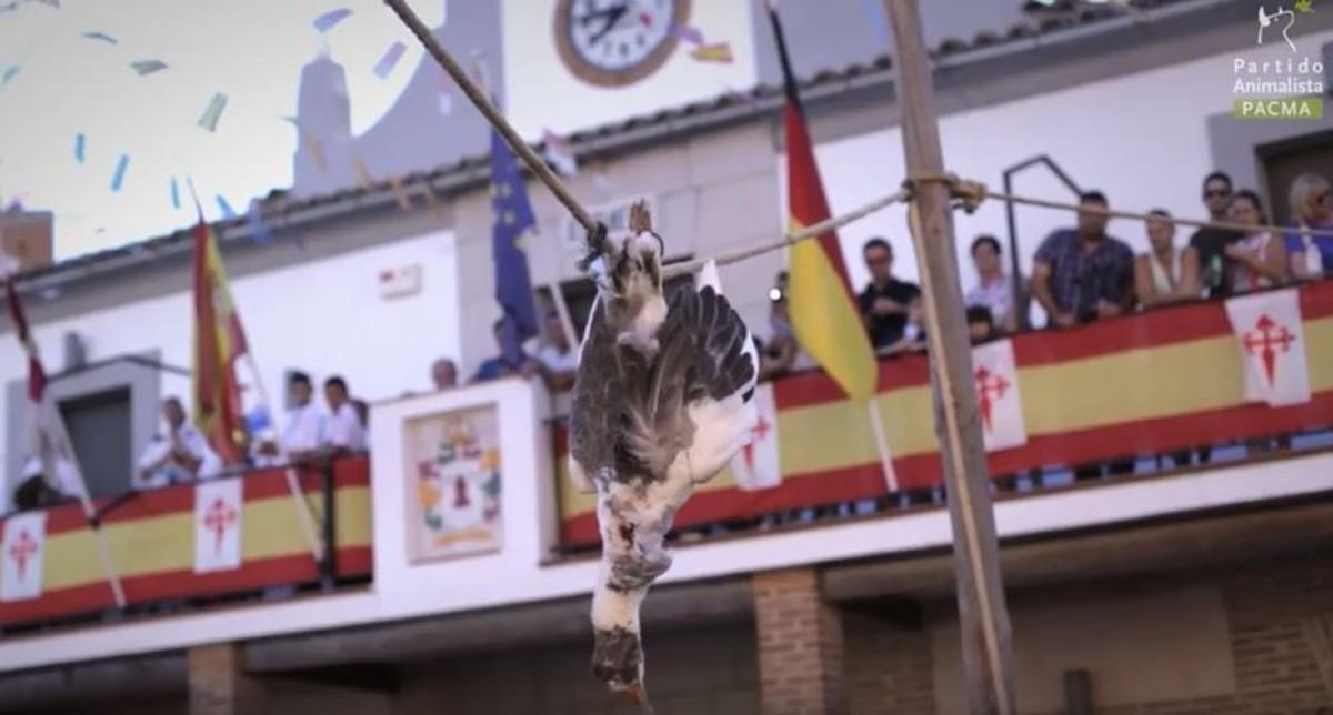 """El hilo que recopila las tradiciones """"más vergonzosas"""" con animales en España"""